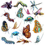 Insects Poster 4