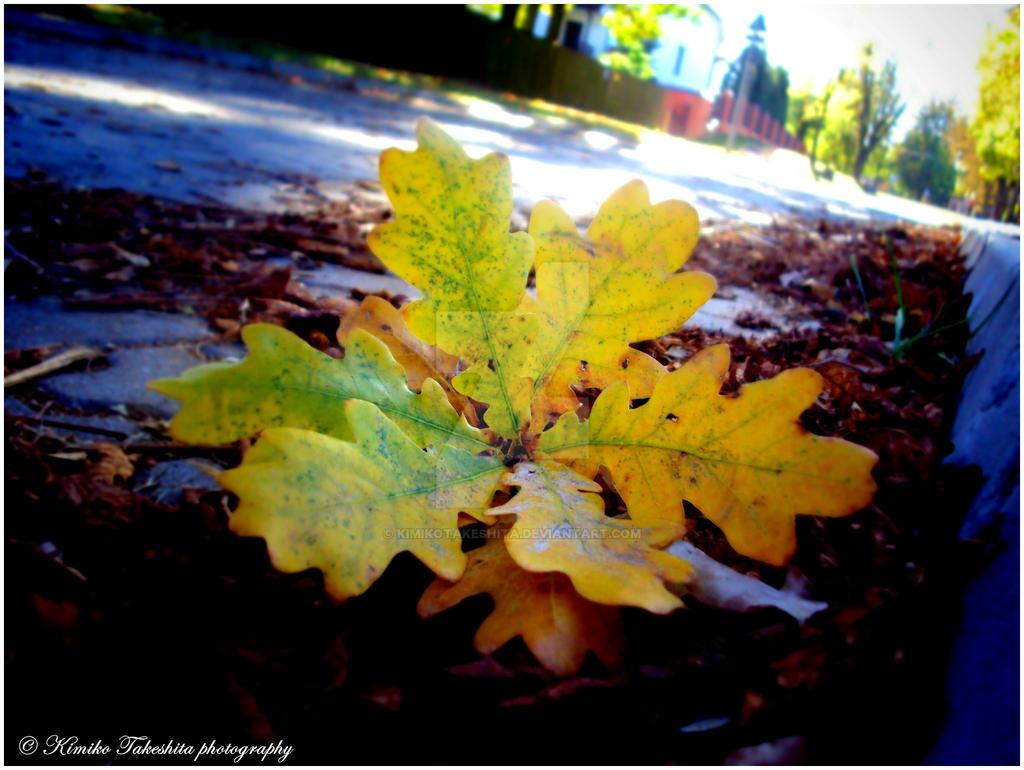 . Autumn . by KimikoTakeshita
