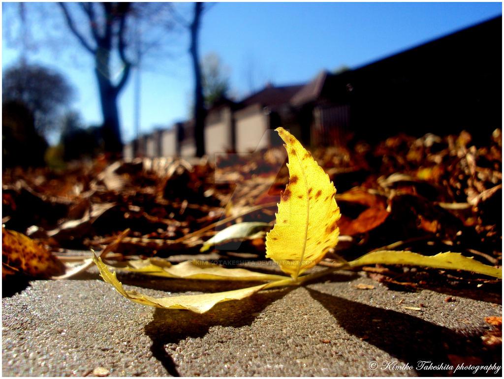 . Autumn I . by KimikoTakeshita