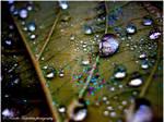 . Water drops II .