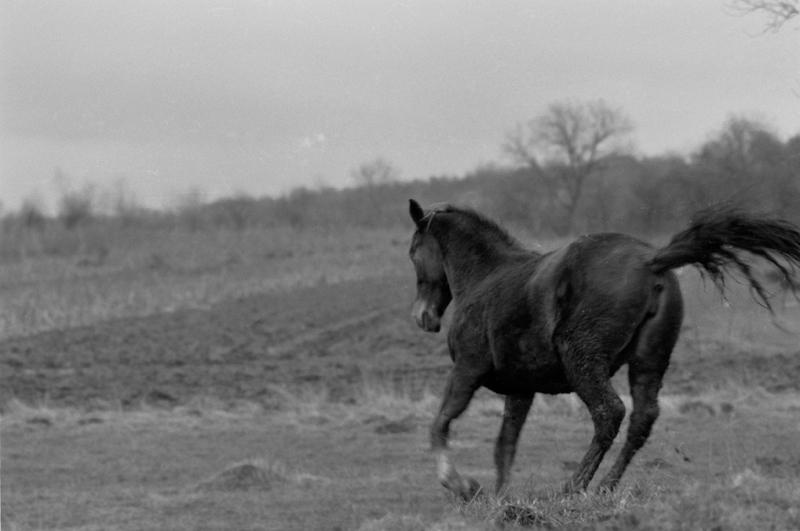 Horse by AlexRadu