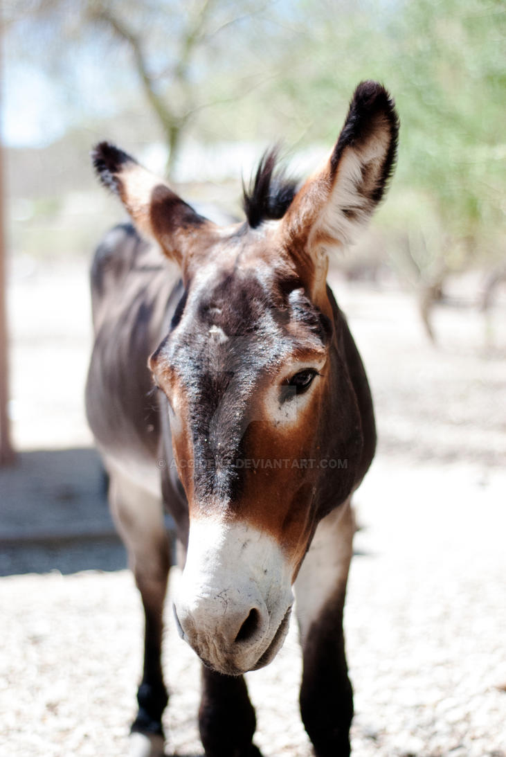 Donkey! by accident