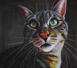 Chalk Cat Drawing by HelenFelicia