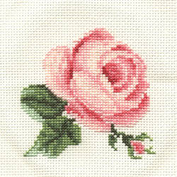 Rose by aprilshlin