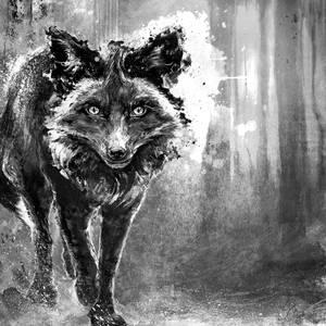 Silver Fox for Dayshell album cover