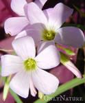 Love Plant 2