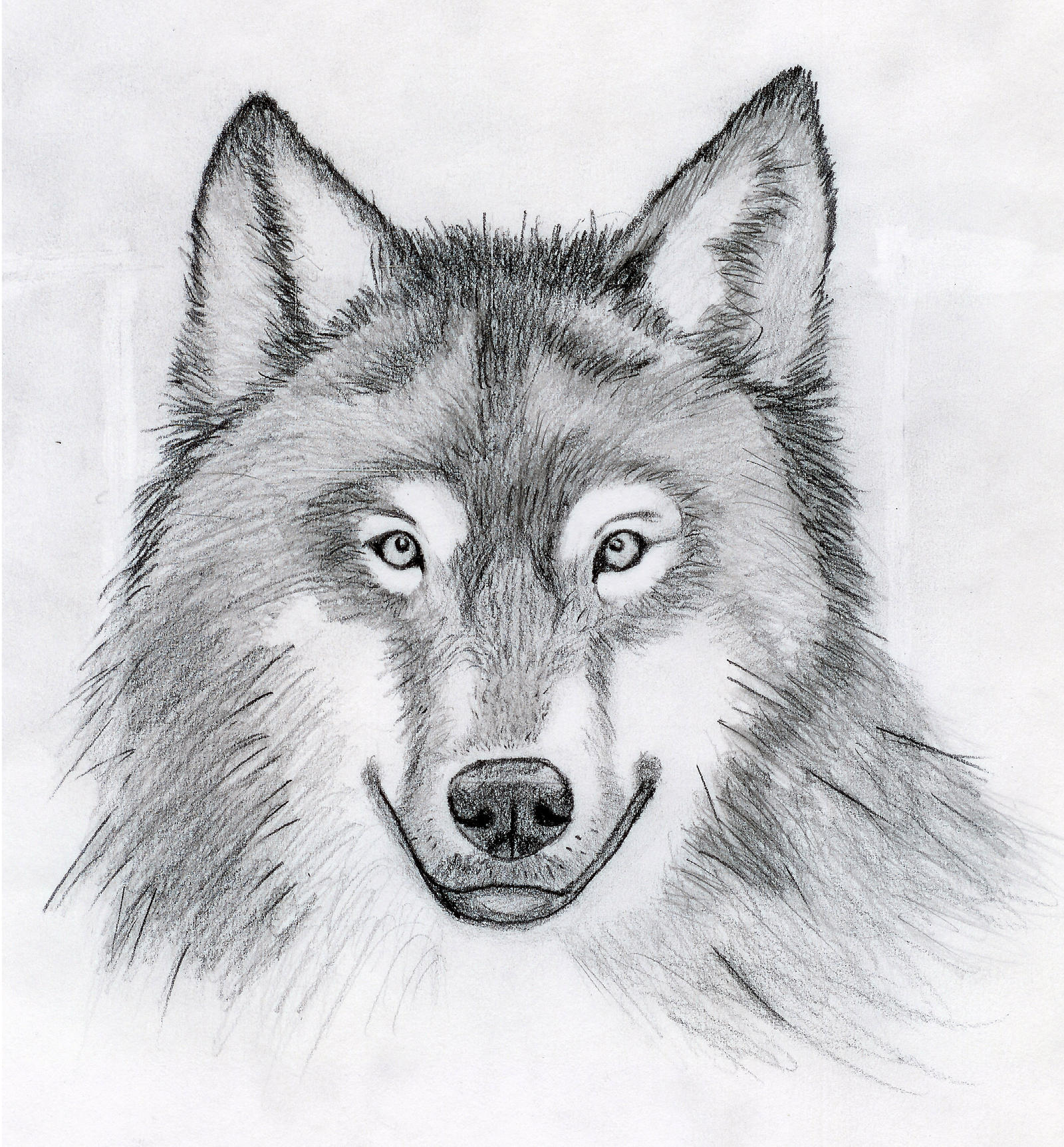 Wolf Head Drawing By Cywolfe
