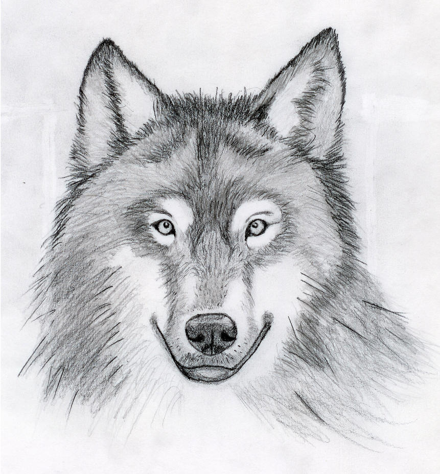 Wolf Head Drawing by C...