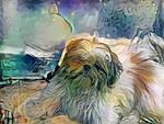 my little dog by RSandrineD