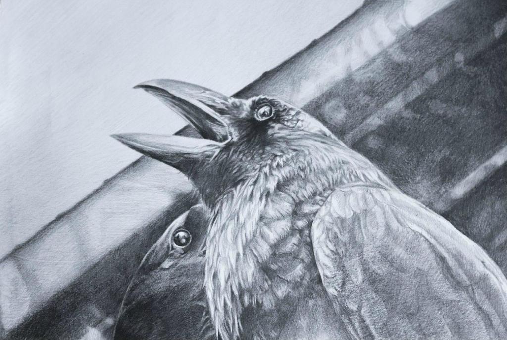 birds by Dagger-dancer