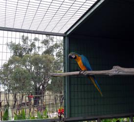 Parrot...I think by Aximili-6116