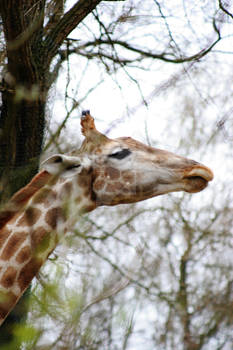 long-necked