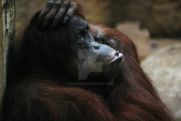 to go ape