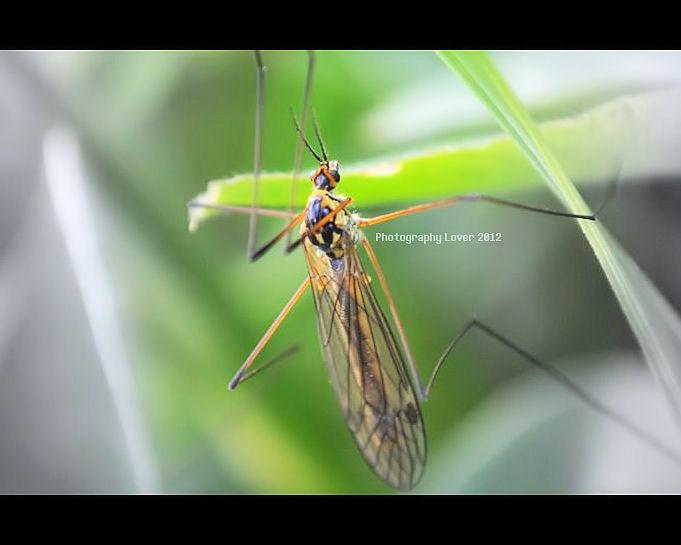 Bug by MelissaPhotos
