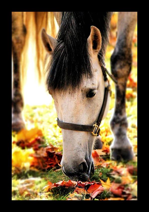 Horse by MelissaPhotos