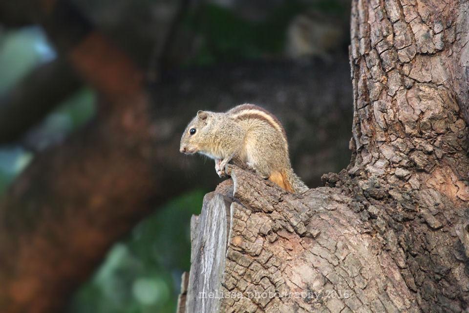 Squirrel xx by MelissaPhotos