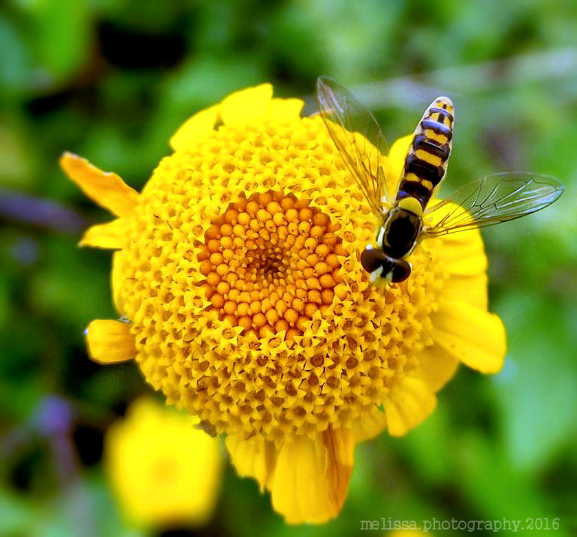 Flower and insect by MelissaPhotos