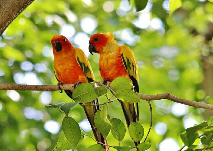 Birds by MelissaPhotos