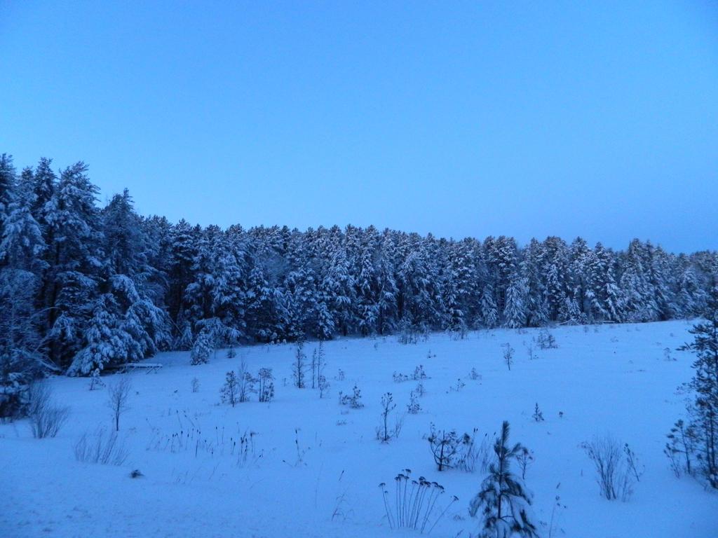 Pine Edge by NickleKing