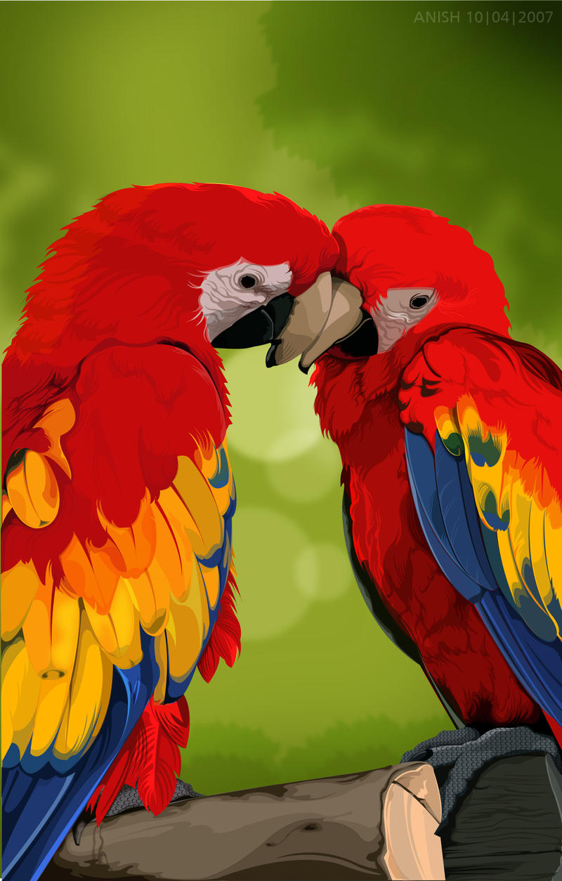 colourful parrots drawing