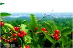 Elevated Berries