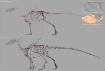Western Dragon Anatomy VS by Rasa88