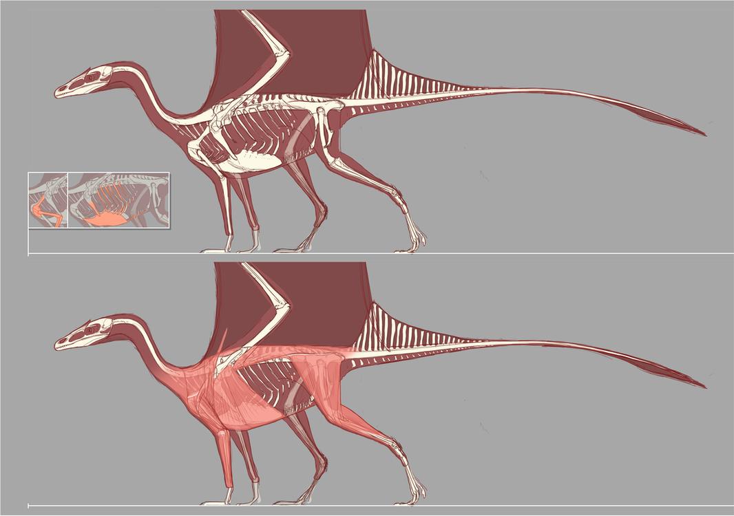 Dragon Anatomy Draft by Rasa88 on DeviantArt
