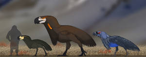 Murder birds but one is flamboyant