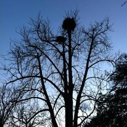 Sadness of a Tree by Hinaru1