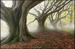 Digital Forest by FriendlyChestnut