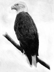 Bird of dignity
