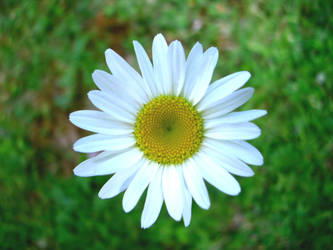 Kiota's Flower by Fine-Line