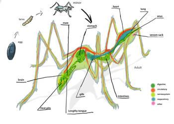 swarm Bio. by Jeremy-Burner