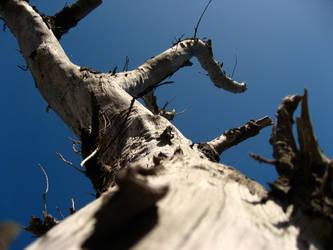 Tree by RimshotDesign