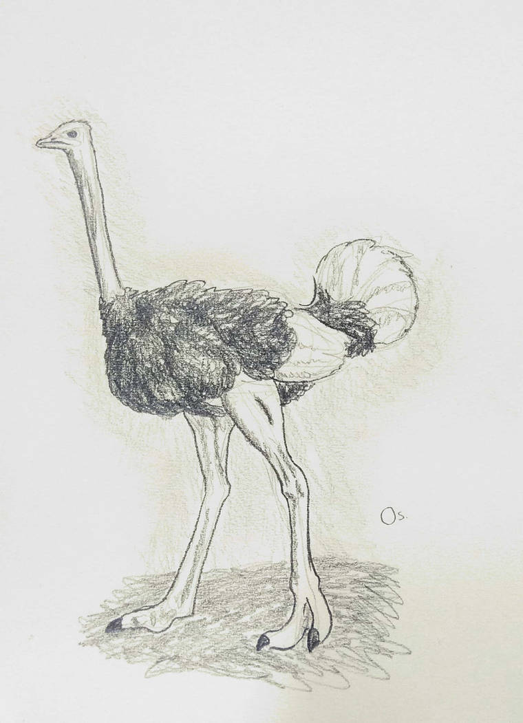 Ostrich by Sherymon