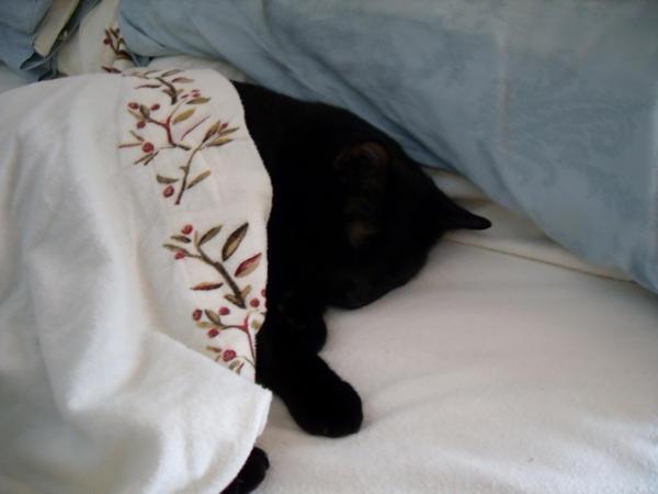 sleeping kitten by sunaluv