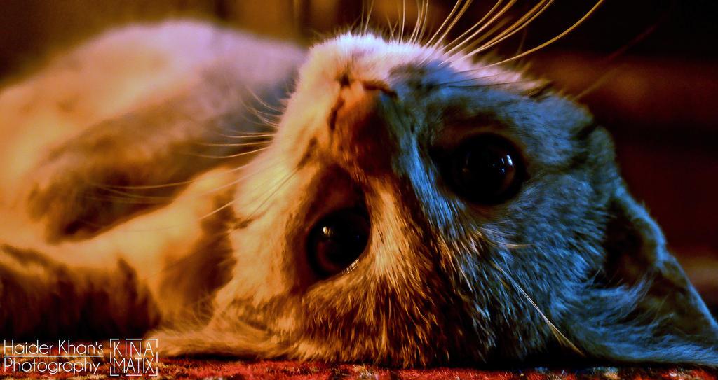Kitten. by KINAMATIX