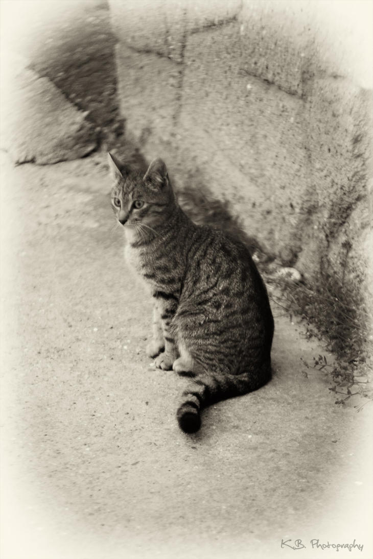 a little cat by kgbphoto