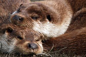 Otters Sleep by dea1h