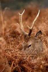 Deer Sleep by dea1h