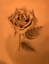Bad Tea Rose