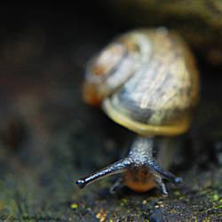 Snail by OlgaC