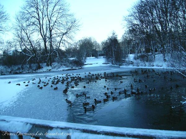 Ducks on the frozen Lake by PrinceCharmingLoki