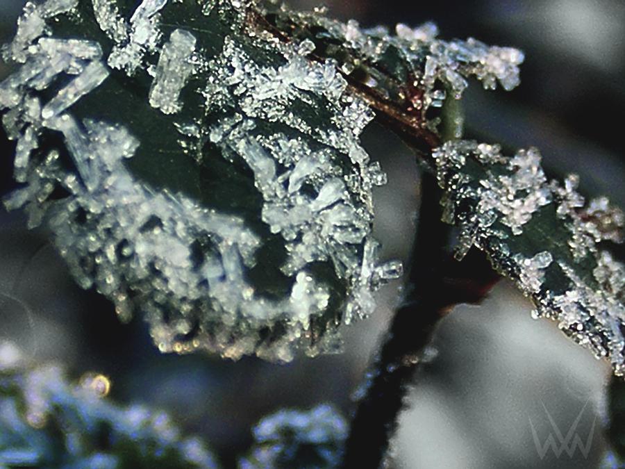 Frost by ReynStorm12