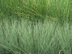 Grasses Texture I by KelHemp