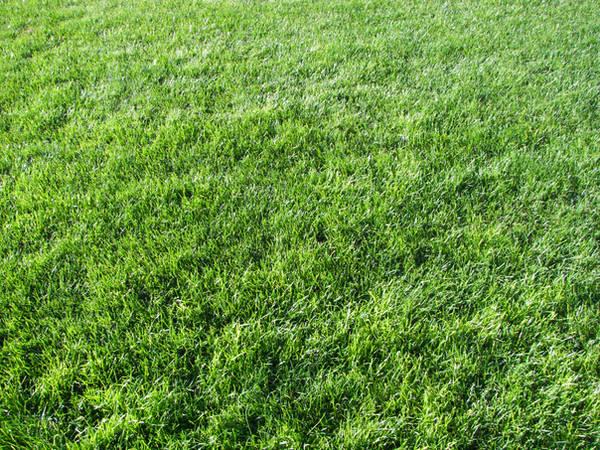 Grass Texture II by KelHemp