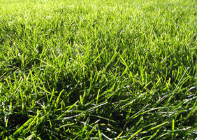 Grass Texture IV by KelHemp