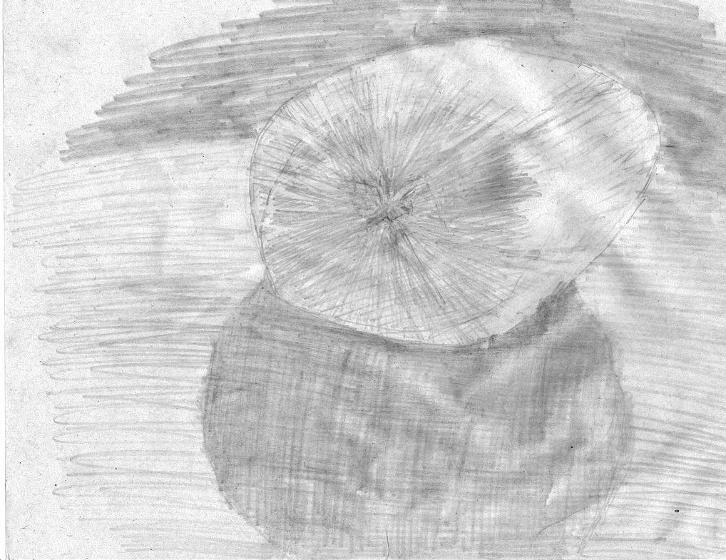 Onion10252014 by PMMurphy