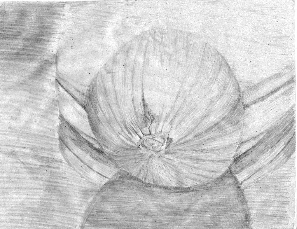 Onion10262014 by PMMurphy