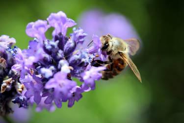 Hungry bee by twinklingstarcatcher